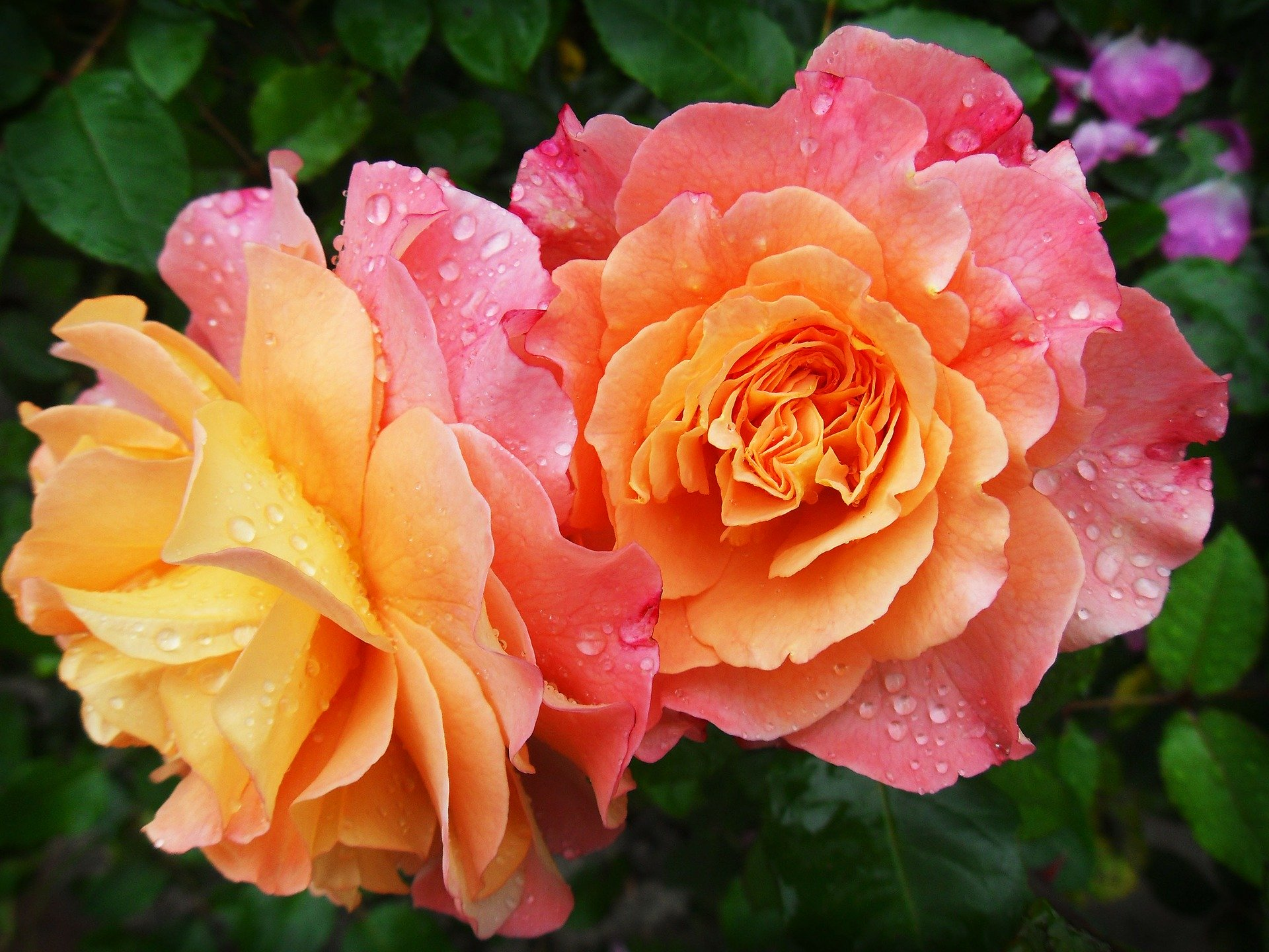 sensuality mindfulness of a flower